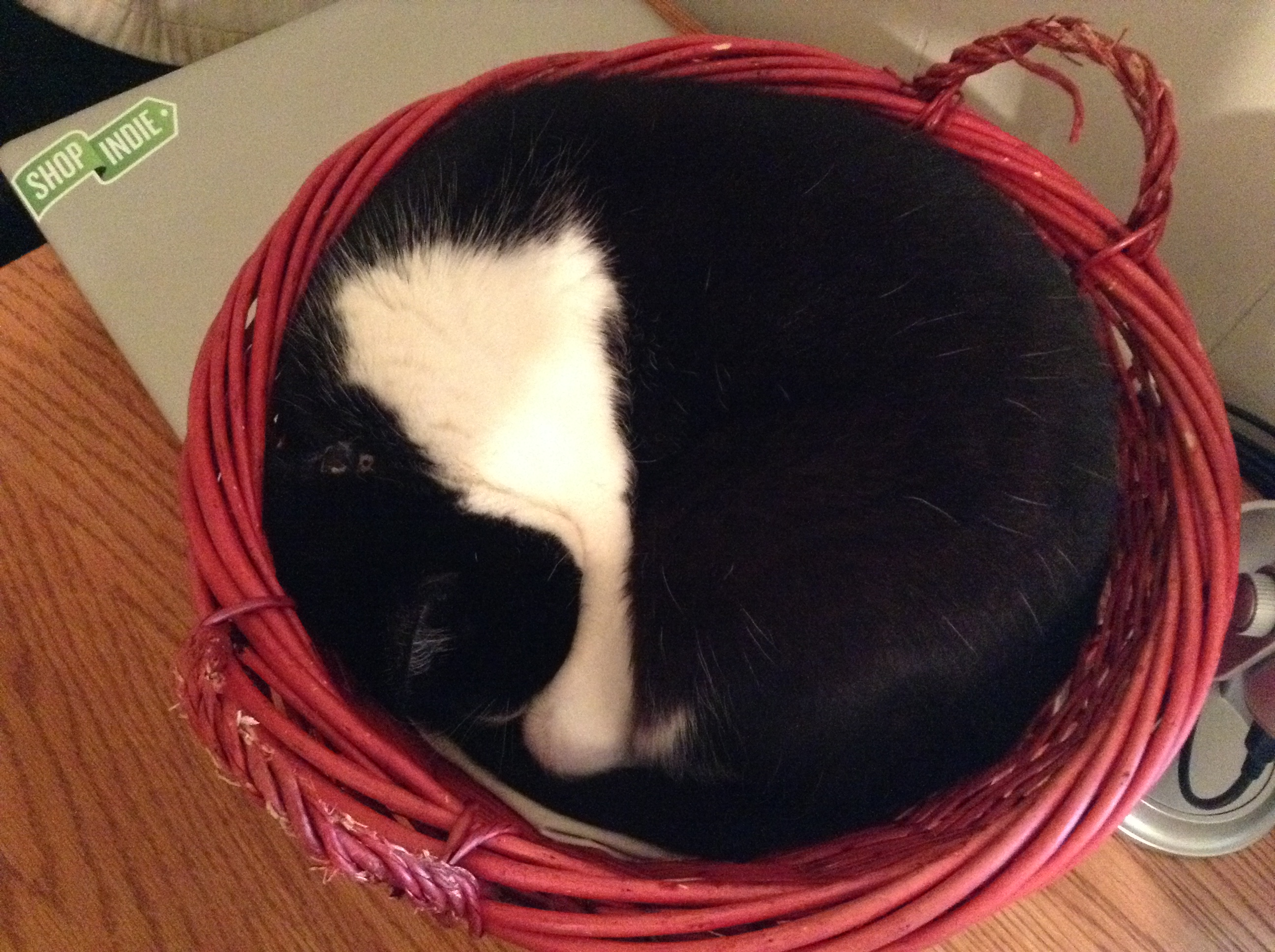 My cat Marley curled up in his favorite basket