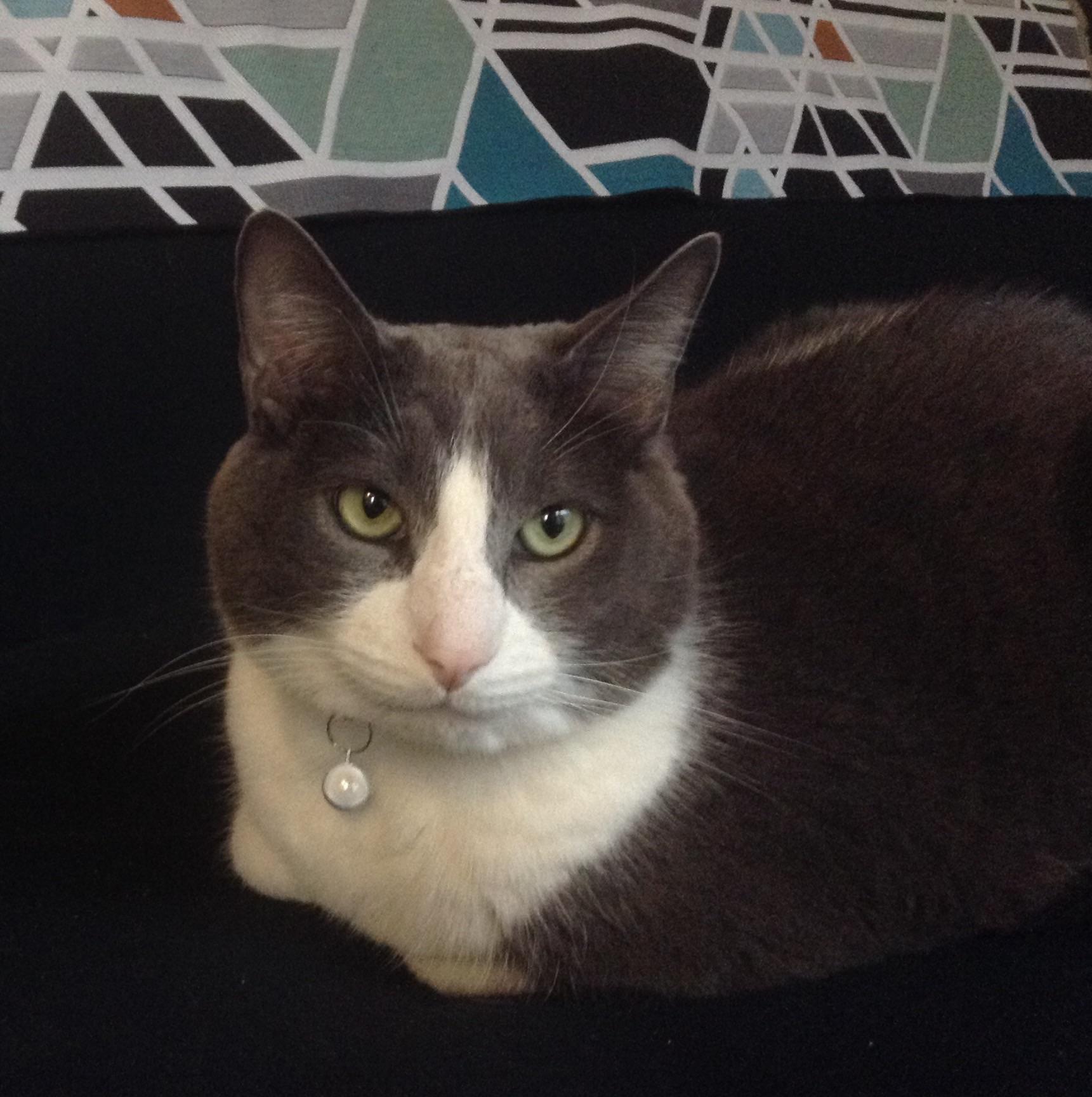 Bob, a cat in Seattle